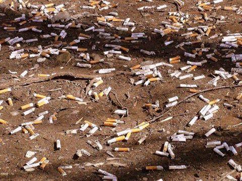 У Білій Церкві під час карантину дезінфікують сміттєві контейнери (ВІДЕО) - дезінфекція, Біла Церква - 92010949 2694115500812494 3765340786942541824 n
