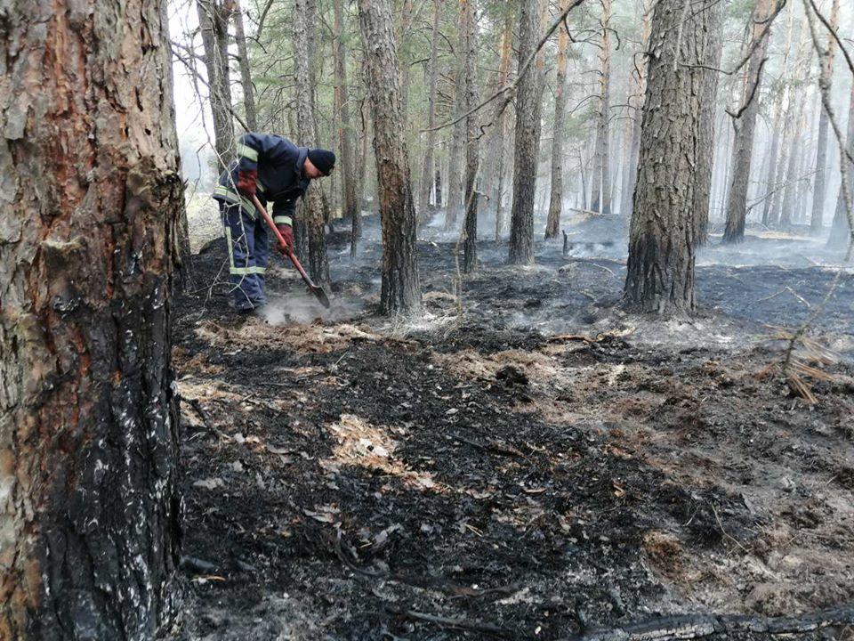 У зоні відчуження ЧАЕС гасять тліючі пеньки та деревину в осередках пройдених вогнем -  - 93021069 3166689593349847 8313833255031799808 o