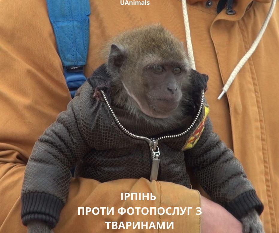 Зупинити жорстокість: в Ірпені вимагають заборонити фотопослуги та жебракування з тваринами - Приірпіння, петиція, київщина, ірпінь, Ірпінська міська рада - Tvar fotozhebr 1 1