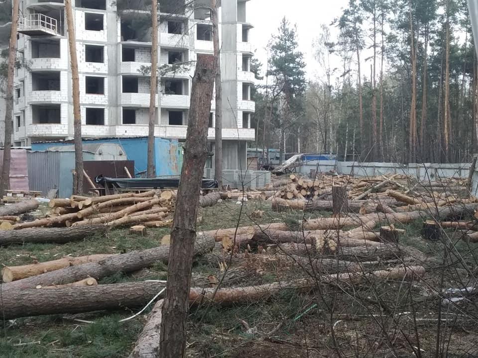 Нищать природу в Ірпені: у районі водоканалу зрізали майже 40 живих дерев - Приірпіння, Лаврентій Кухалейшвілі, київщина, ірпінь, знищення дерев, Захист зелених зон - Vyrub vodokan 1