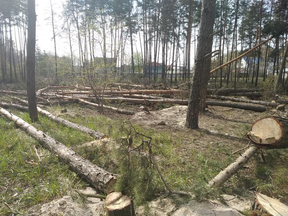 Ірпінський лісоповал: нова спроба дорізати дерева у районі водоканалу - природа, Приірпіння, Лаврентій Кухалейшвілі, київщина, ірпінь, знищення дерев, Захист зелених зон - Vyrub vodokan 4