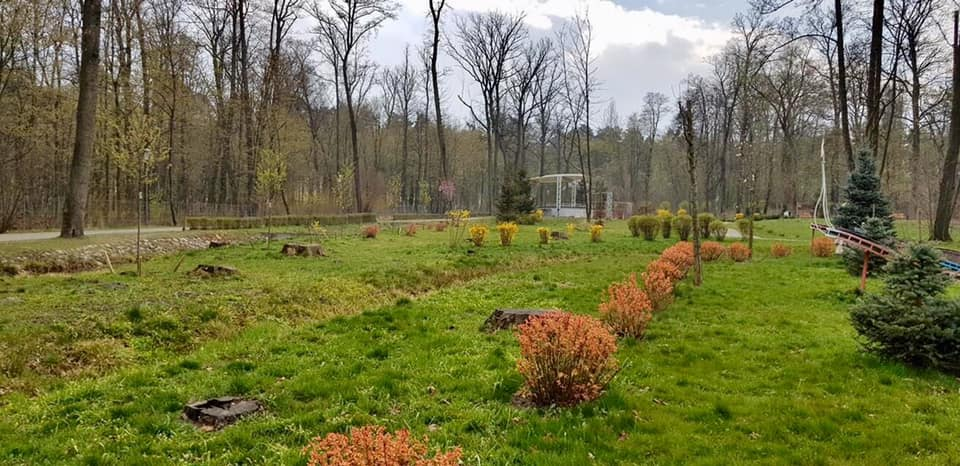 Квітнуть магнолії в парку бучанському - природа, Приірпіння, коронавірус, київщина, карантин, Бучанська ОТГ, Буча - Zvit park 4