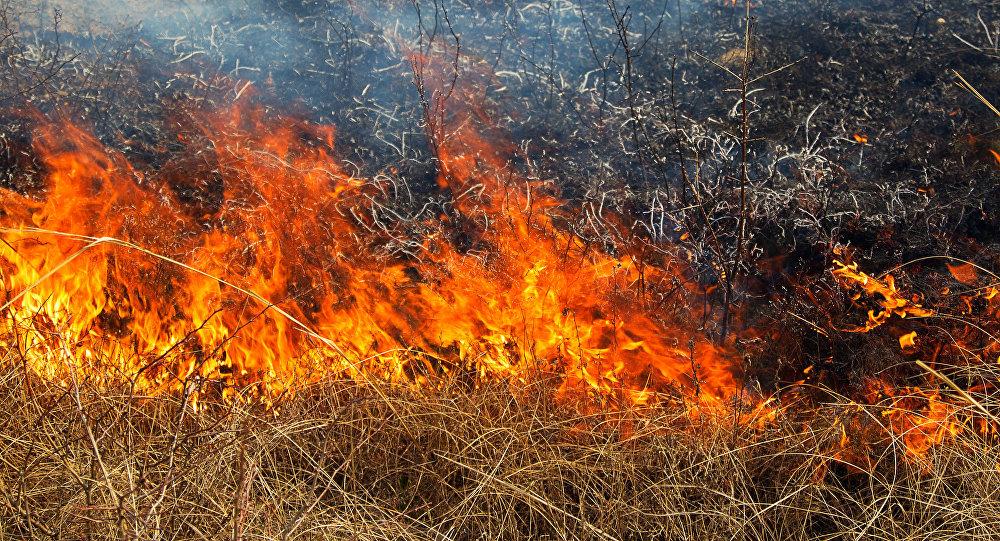 На Вишгородщині згоріло два гектари трав'яного настилу - пожежа, київщина, ДСНС, Вишгородський район - eko