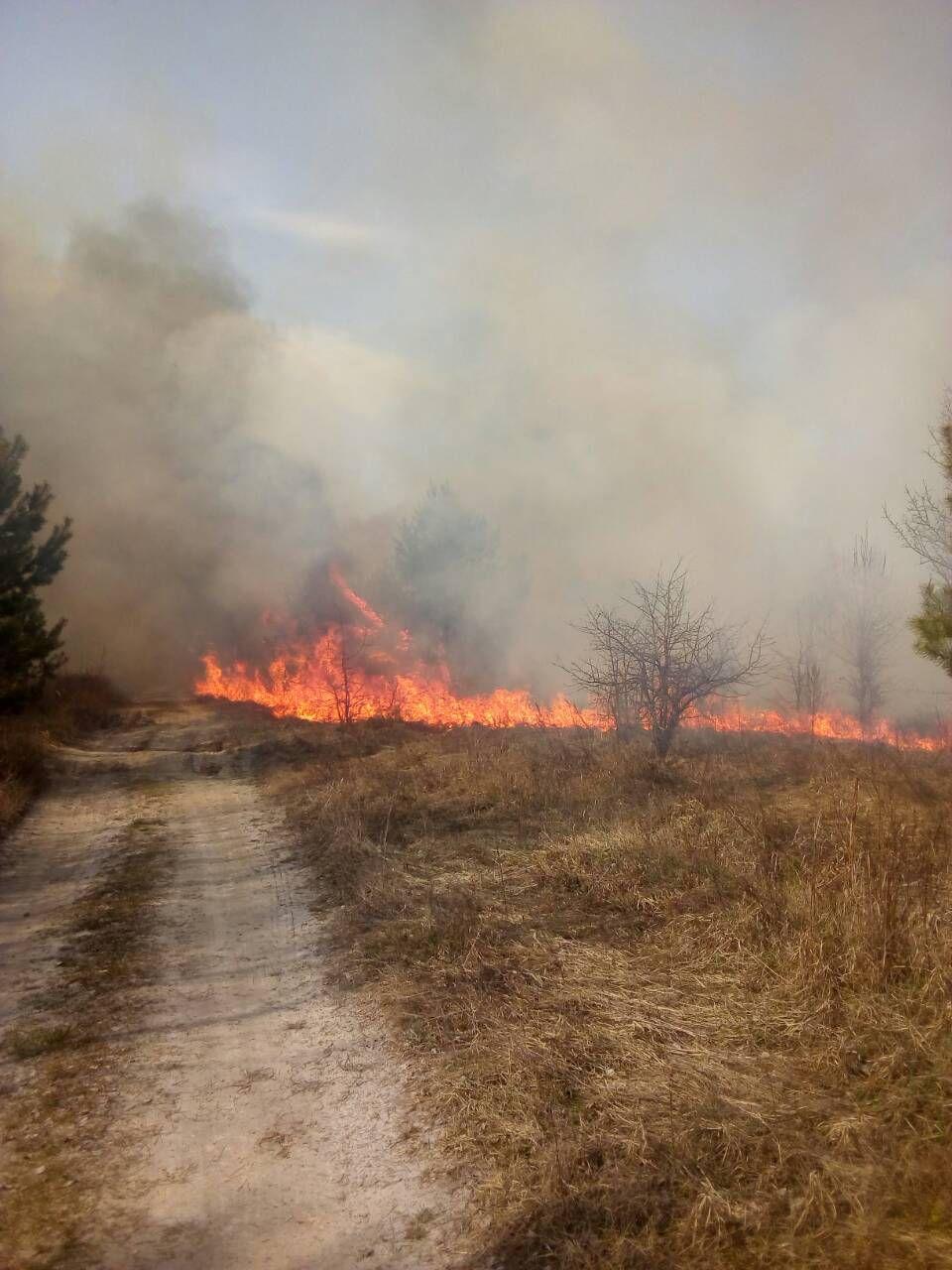 На Іванківщині горіли гектари лісової підстилки, зелених насаджень та сміття -  - photo 2020 03 28 08 58 48