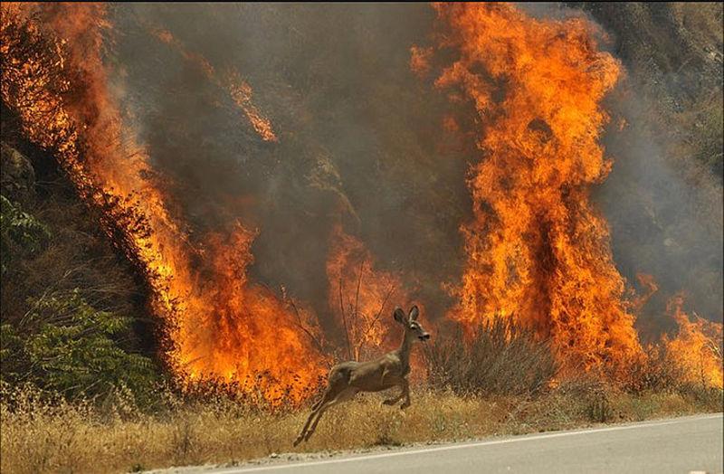 50 тисяч штрафу за спалювання трави: на сайті президента з'явилась петиція - петиція - pozhezha 2 fb
