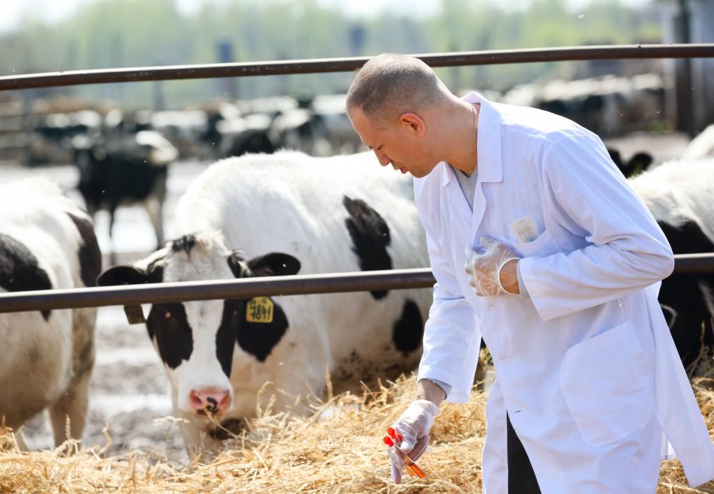 Сьогодні Всесвітній день ветеринарного лікаря -  - shutterstock 138454187 1024x708 1
