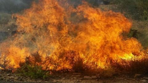 У зоні відчуження ЧАЕС триває ліквідація масштабної лісової пожежі: задіяна авіація -  - trava2