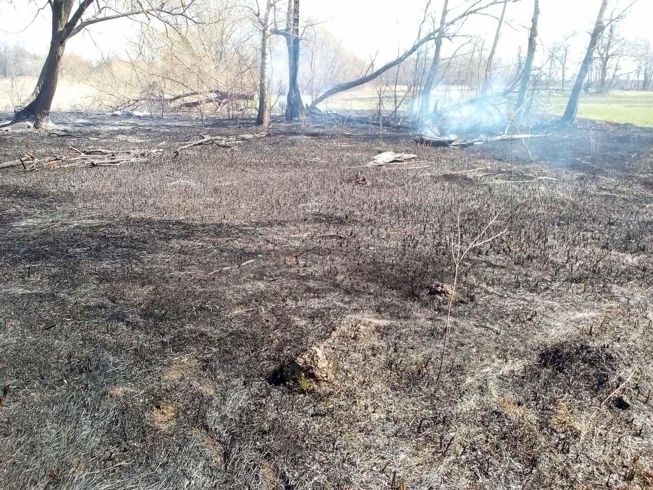 """У Яготинському районі бабуся влаштувала пожежу, щоб """"викурити"""" лисиць -  - viber image 2020 04 03 13 52kkkk15"""