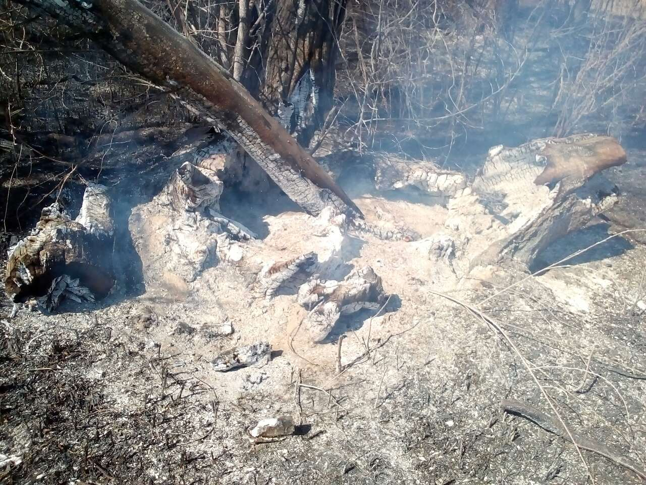 """У Яготинському районі бабуся влаштувала пожежу, щоб """"викурити"""" лисиць -  - viber image 2020 04 03 1kk3 52 14"""