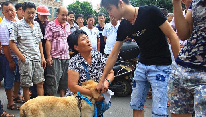 У Китаї офіційно відмовилися від вживання собачого м'яса -  - xw 1109953