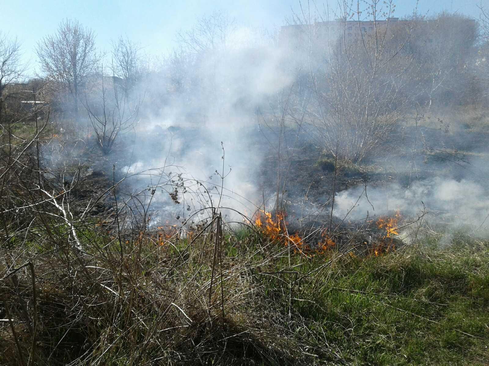 Білоцерківщина у вогні: рятувальники 4 рази протягом доби гасили пожежі у природних екосистемах - пожежі, ДСНС, Біла Церква - yzobrazhenye viber2