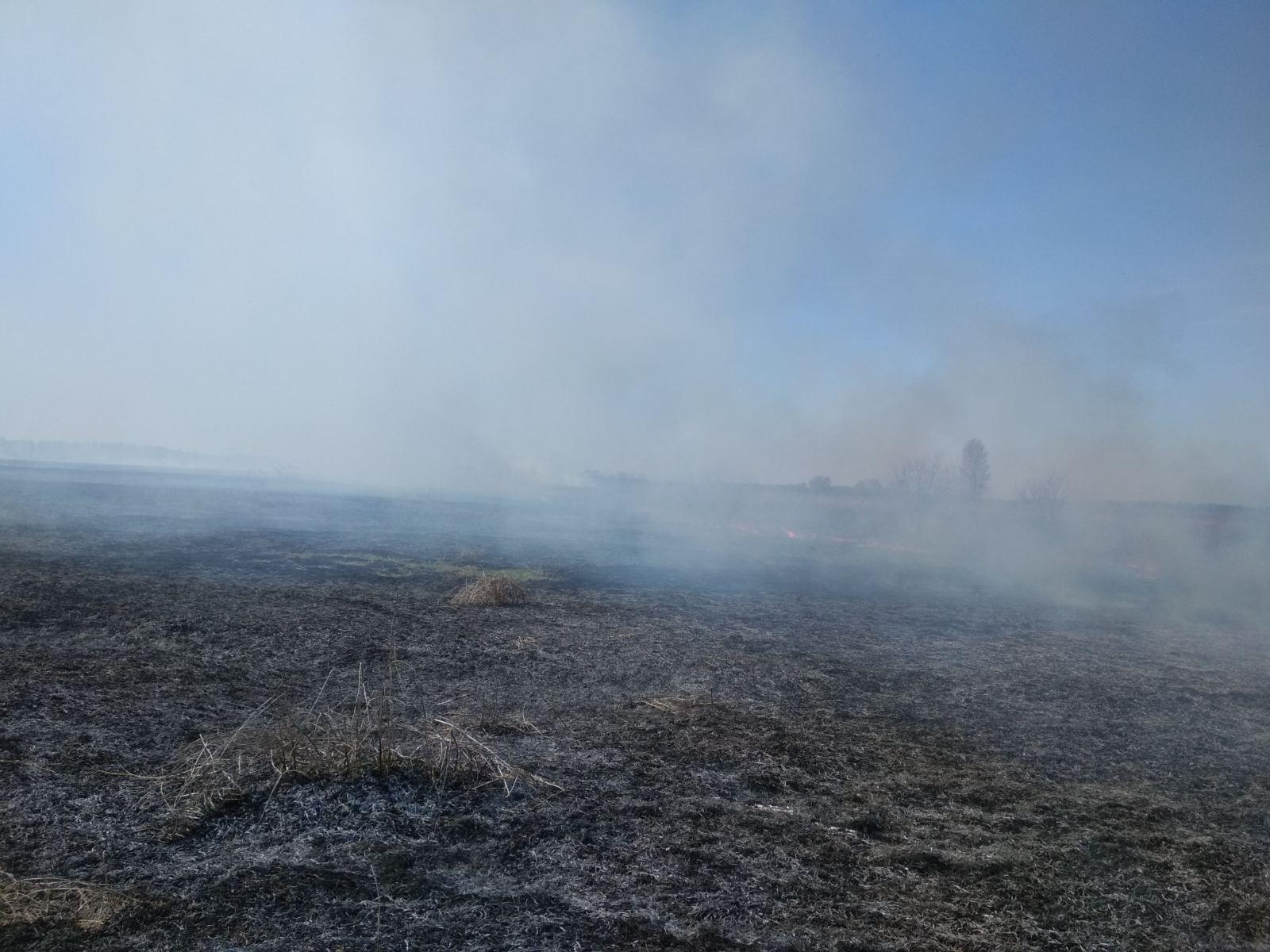 На Броварщині рятувальники борються з пожежами в екосистемах -  - yzobrazhenye viber 2020 04 09 20 51 03 1