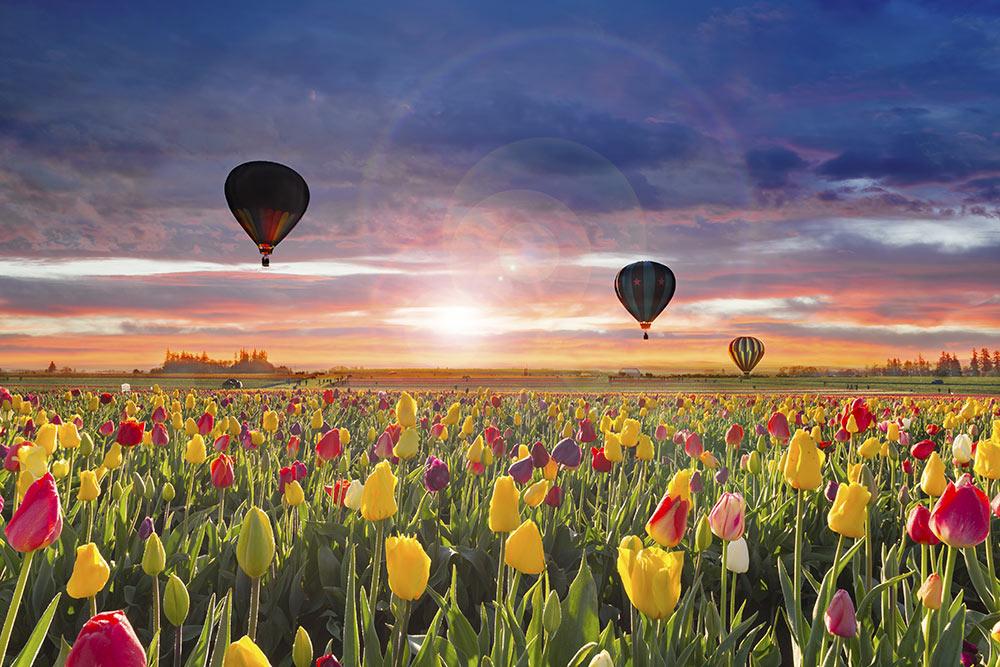 20 величезних повітряних куль піднімуться у небо під Києвом - фестиваль повітряних куль - 27 kuly 1