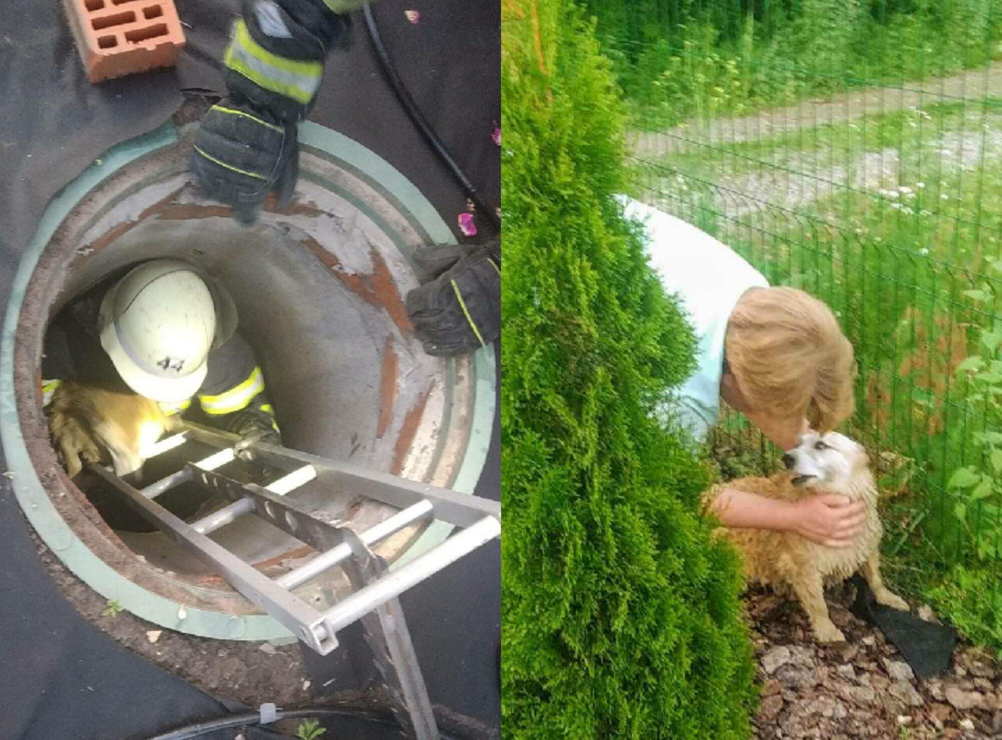 Впав у колодязь: у Чабанах надзвичайники врятували маленького собачку -  - 20200618 095346 2000x1477