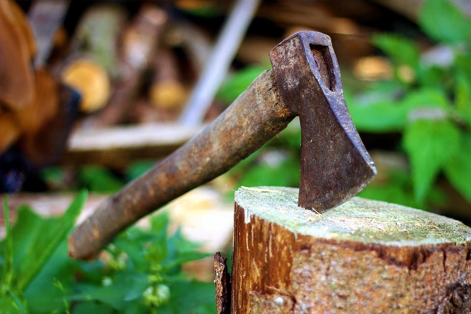 За 11 зрубаних дерев на Київщині чоловіку загрожує від 5 до 7 років в'язниці - суд, Миронівка, київщина - 24 rubal derevo