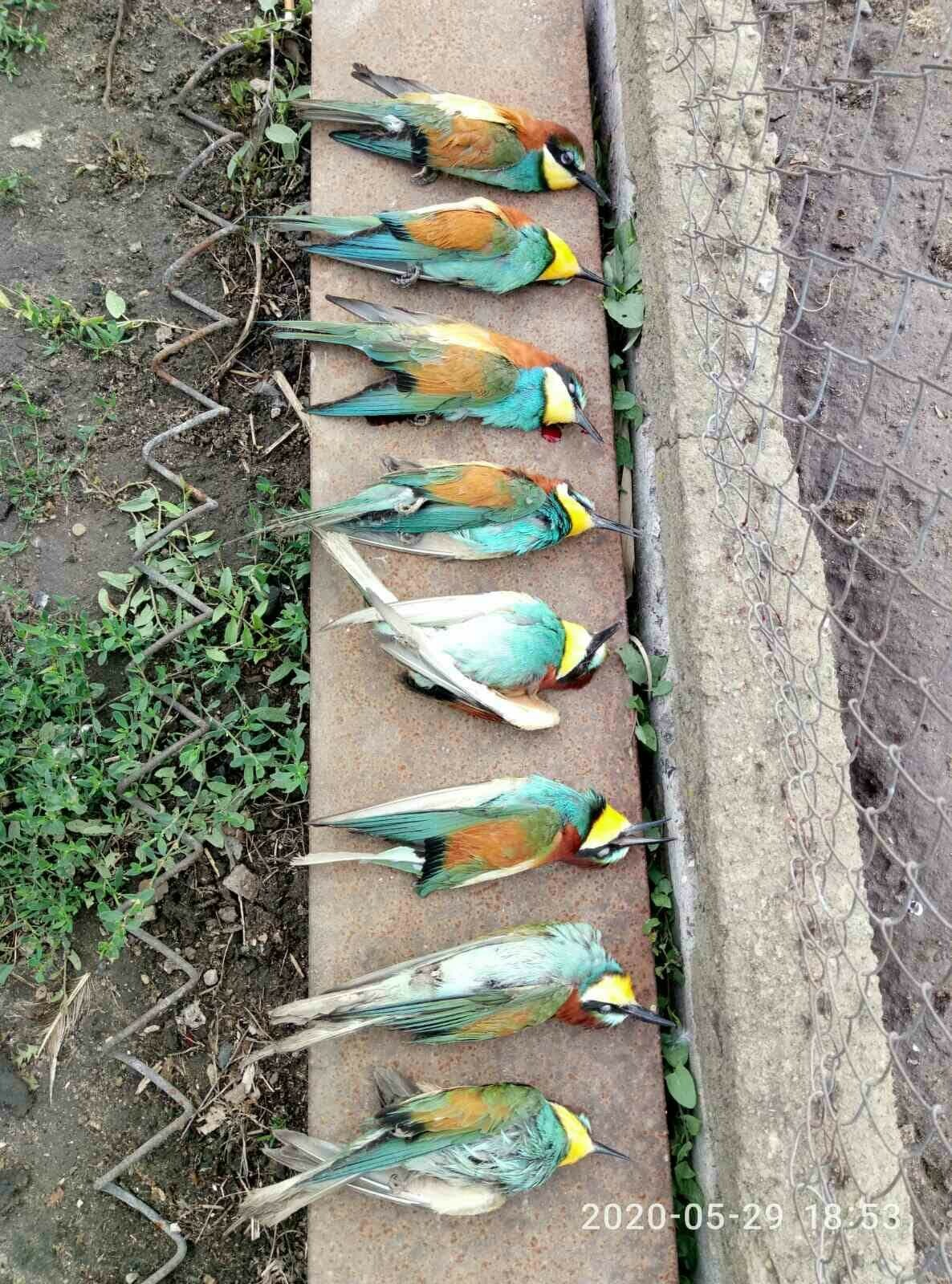 Шокуюче варварство: на Київщині бджолярі винищують птахів -  - 5ed8c1f034efa