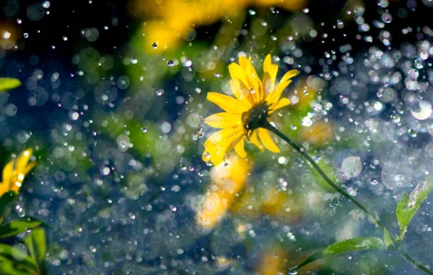 Тепло й подекуди дощ: погода на Київщині 15 червня -  - june 14 b3f42 87eb301114a5eb74c934756e1d419441 b3f42 resize free 850 0