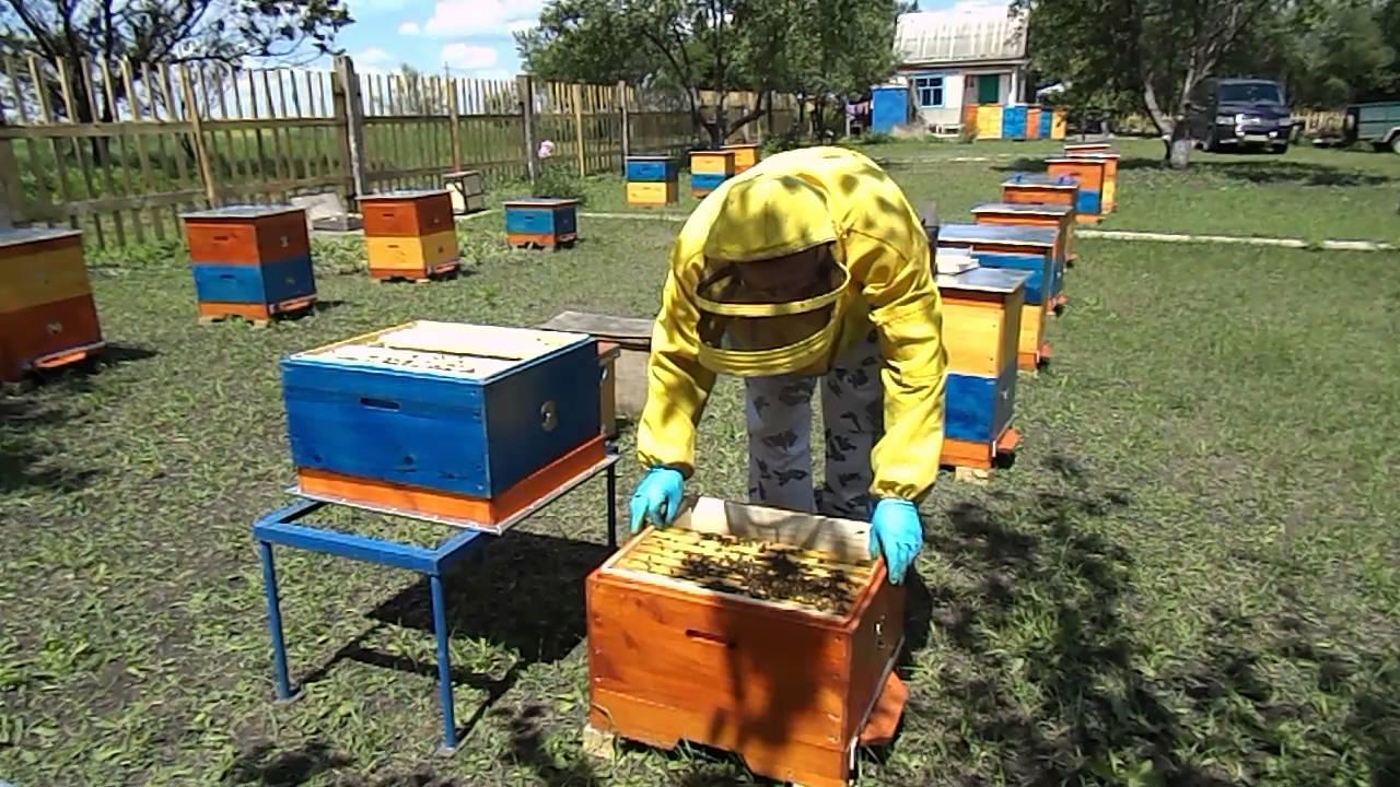 Шокуюче варварство: на Київщині бджолярі винищують птахів -  - maxresdefault 1