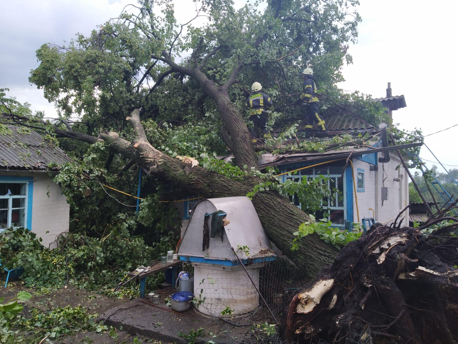 На Обухівщині велике дерево впало на приватний будинок -  - media share 0 02 05 85ab054111f68f7d6505b4f5043fd4cc963c2c7202373565dfdbb85358143ec8 5fa953ce 42d5 45fb b1f5 552265afe204