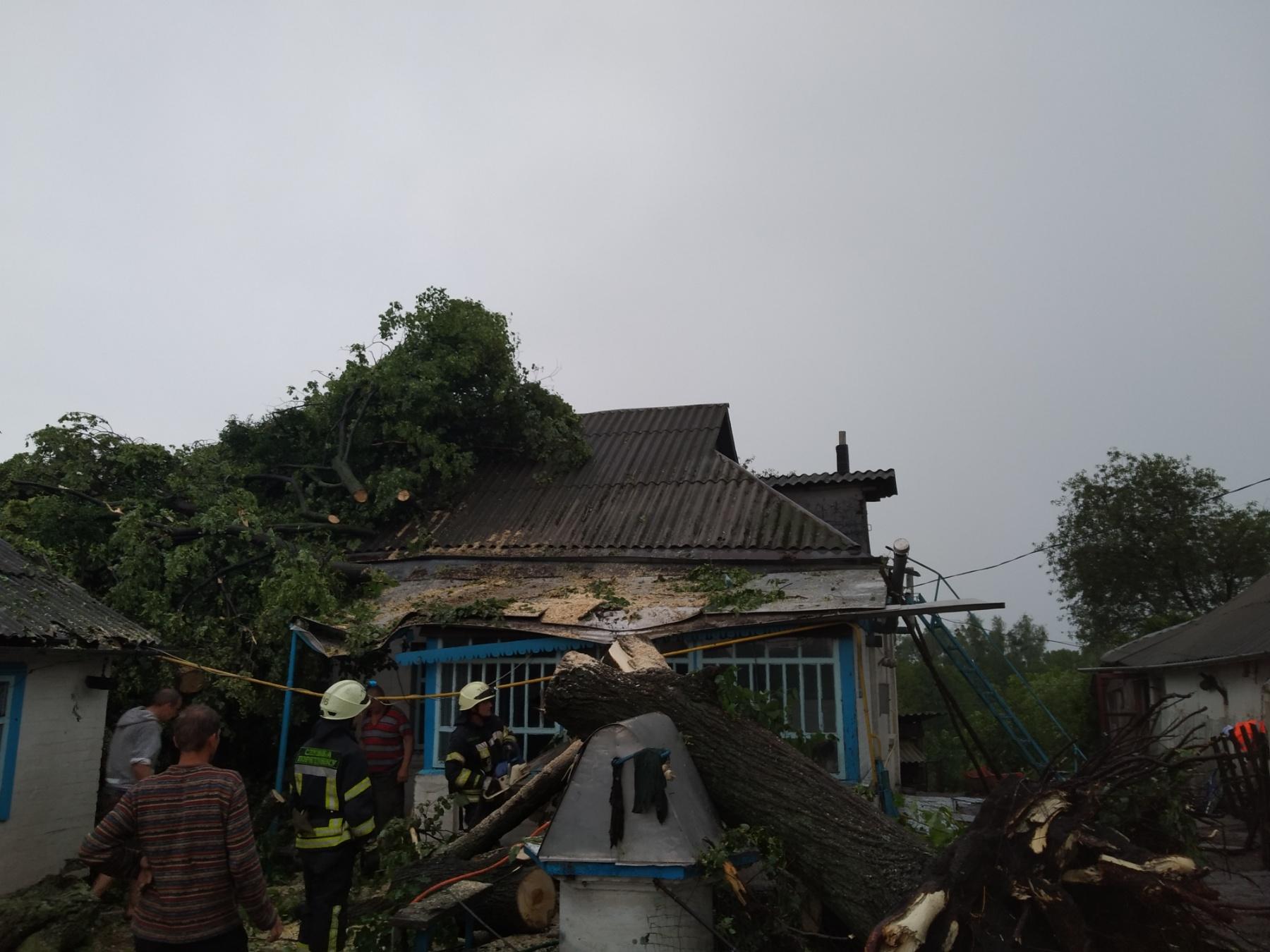На Обухівщині велике дерево впало на приватний будинок -  - media share 0 02 0a 30d5e9d3afbc35dcaf98064ce064ef2b83eb2029a78fb65433bc9decd47f2cb6 67396a9a 6309 48c4 88d1 5ce61c5dfc27