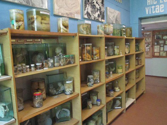 Мало хто знає, але у Переяславі працює музей патології людини -  - o 1ea1gcqhscr24811e171vlg19gl2h