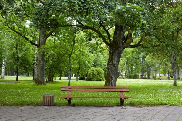"""""""Зелена Брама"""": у Софіївській Борщагівці з'явиться парк -  - park"""