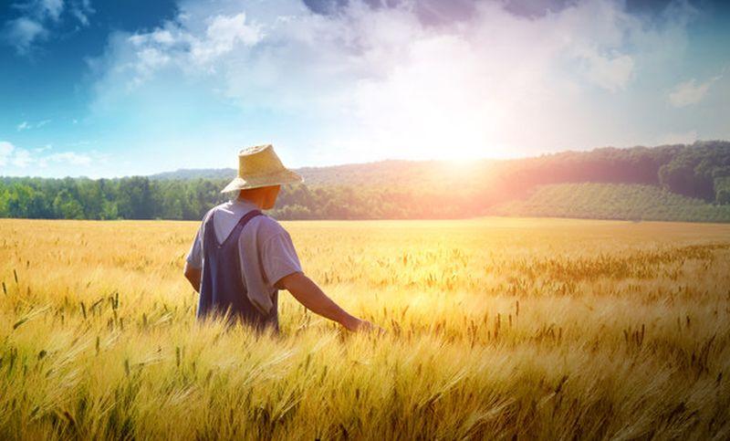 В Україні вперше відзначають День фермера -  - runokzemli0910