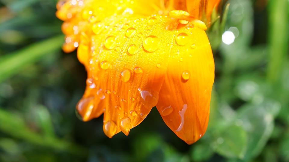 На вихідних синоптики обіцяють на Київщині дощі, грози та спеку - прогноз погоди, прогноз пгоди, погода на вихідні, погода - 04 pogoda