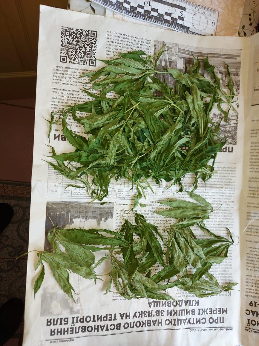 Замість вазонів конопля: у Немішаєвому чоловік вирощував «плантацію» у себе на підвіконні - Наркотичні речовини, наркотична речовина, наркотики - 09 konoplya3