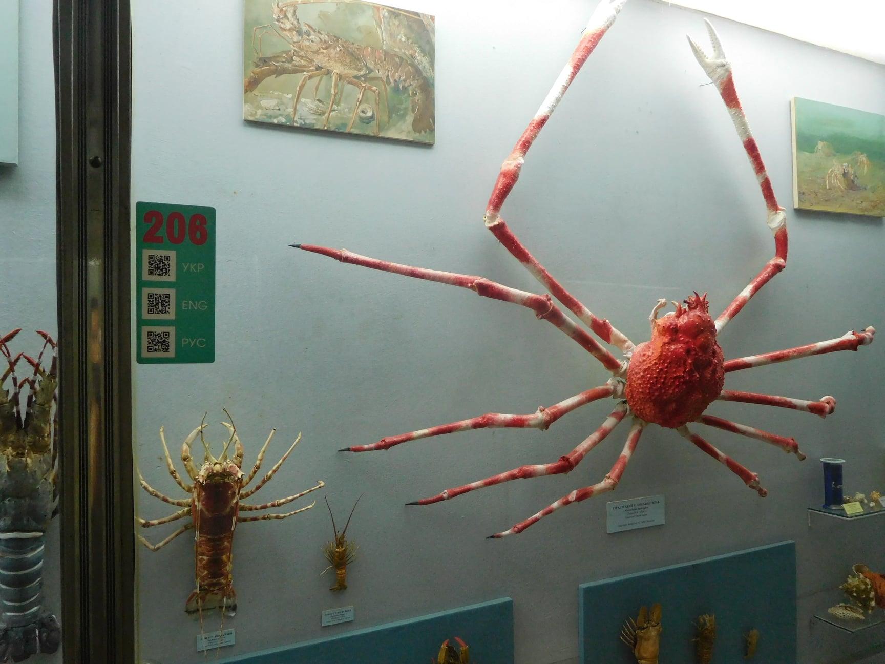 У науково-природничому музеї Києва з'явився безкоштовний аудіогід -  - 107622733 1398619843666901 315786545547841436 o