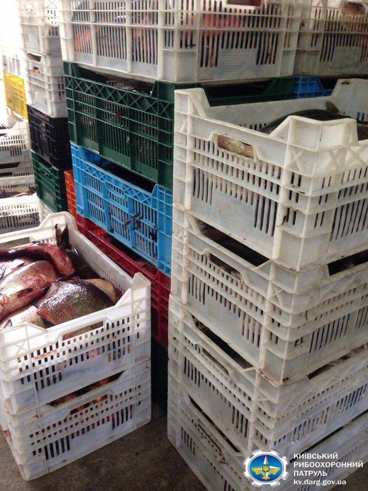 На Іванківщині викрито незаконне придбання 876,5 кг риби - рибоохоронний патруль, порушник, Іванківський район, водні біоресурси - 107664392 145235997181765 682714012425098450 o