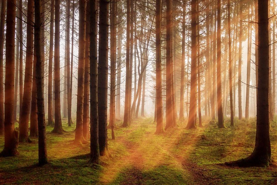 В Україні розроблять стратегію управління лісами на 15 років - управління лісами, стратегія управління лісами, стартегія лісу, лісові пожежі, ліси - 10 les