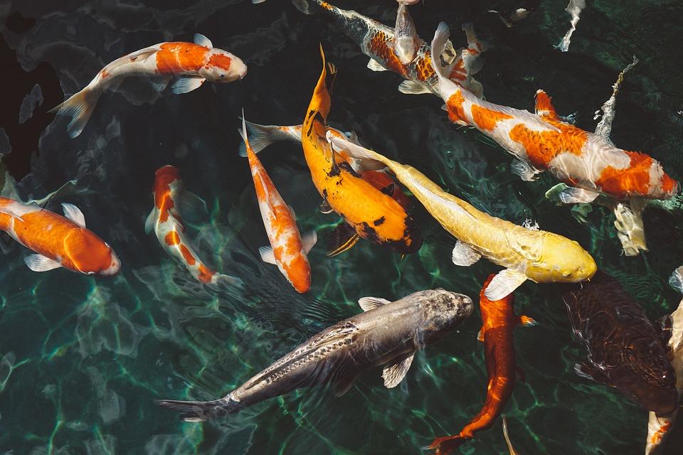 Глобальне потепління може стати причиною зникнення 60% всіх риб - риба, зміни клімату, глобальні зміни клімату, глобальне потепління - 15 ryba