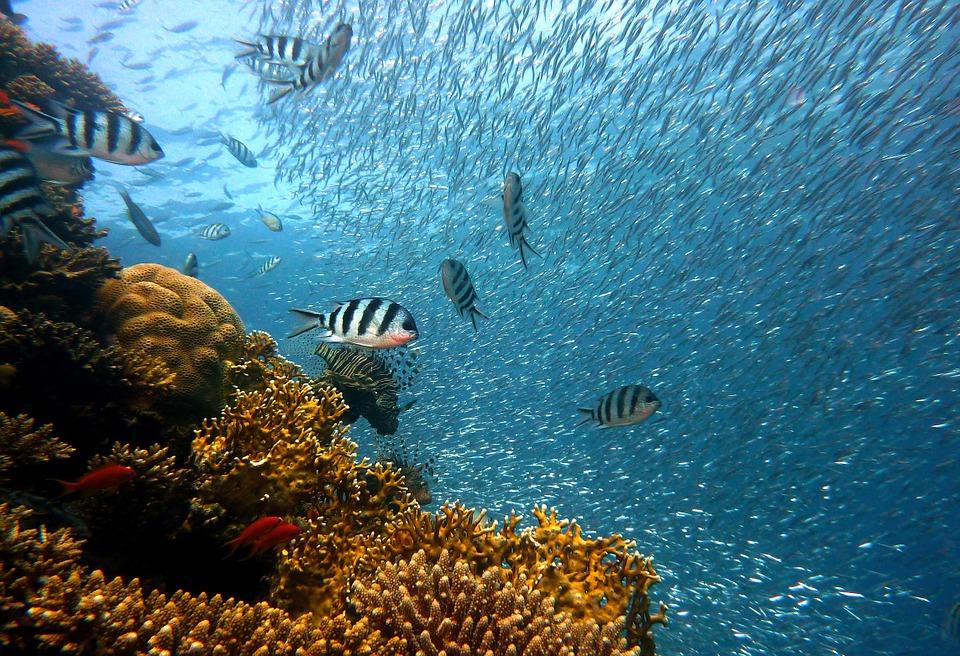 Глобальне потепління може стати причиною зникнення 60% всіх риб - риба, зміни клімату, глобальні зміни клімату, глобальне потепління - 15 ryba2