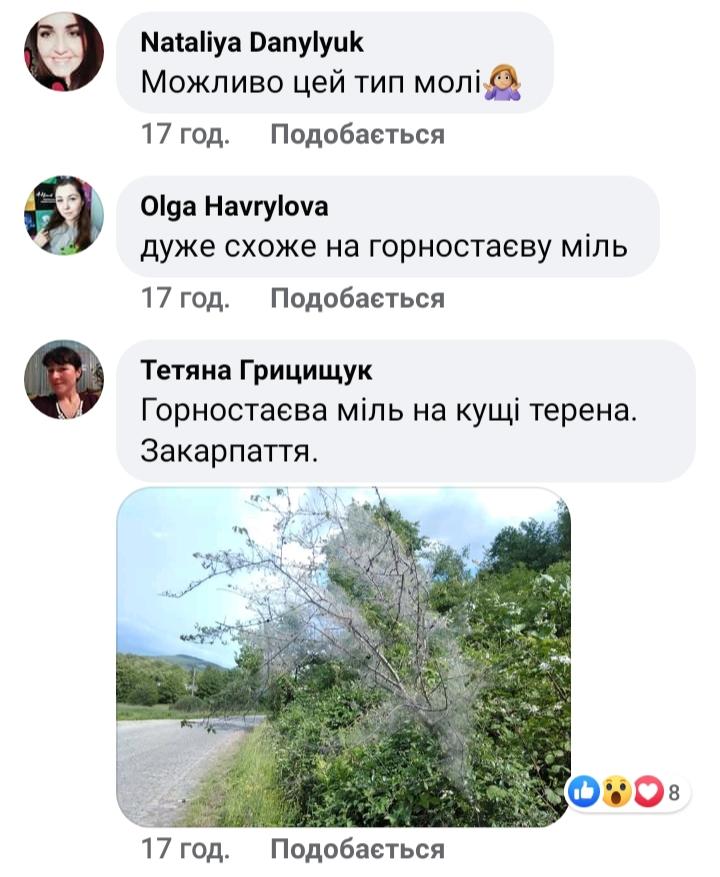 Страшне павутиння обплутало дерева біля озера Круглик на Київщині - Павутинні, Круглик, Києво-Святошинський район - 20200710 101925