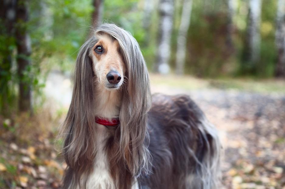 2 липня відзначають Міжнародний день собак -  - 5014361499657ad34f5df59c188a7b4c