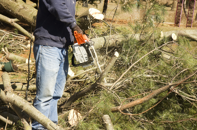 У Баришівському районі чоловік вирубав дерева на майже 300 тис грн - Прокуратура, ліс, Баришівка - 55