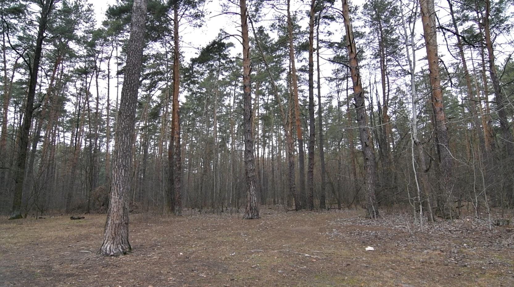 Державі повернули 5,8 га Біличанського лісу вартістю понад 51 мільйон гривень, які незаконно передали у власність - прокуратура Київщини, Приірпіння, Лісові землі, коцюбинське, київщина, ірпінь, Гостомель, Біличанський ліс - Bil lis