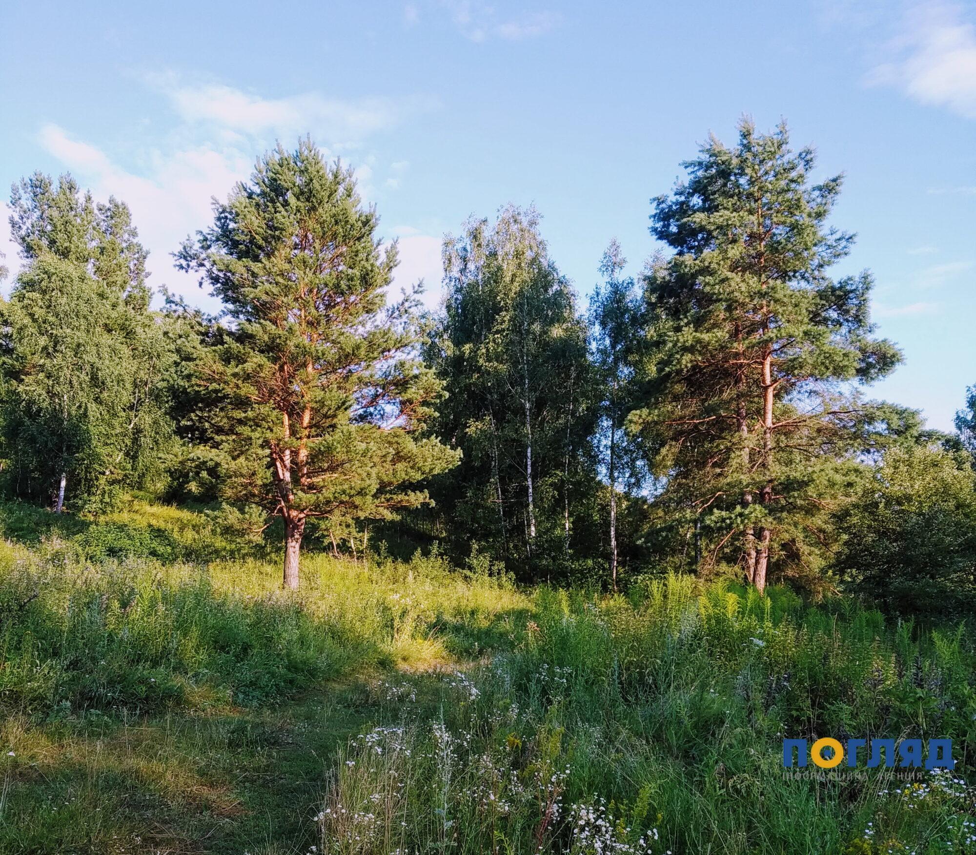 Ліс на мільйон повернули державі на Обухівщині - ліс, забудова, ділянка - IMG 20190712 192420 2000x1751
