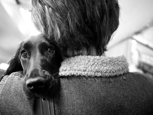 2 липня відзначають Міжнародний день собак -  - unnamed 1