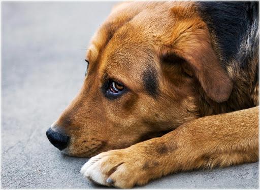2 липня відзначають Міжнародний день собак -  - unnamed