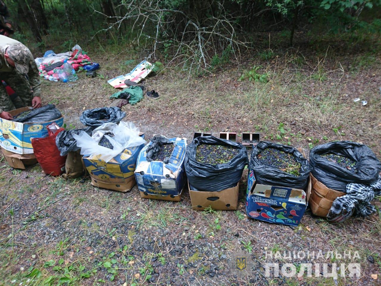 У збирачів в зоні відчуження ЧАЕС вилучено 300 кг ягід та 20 кг грибів - ЧАЕС, Поліція, Зона відчуження - yagodu1