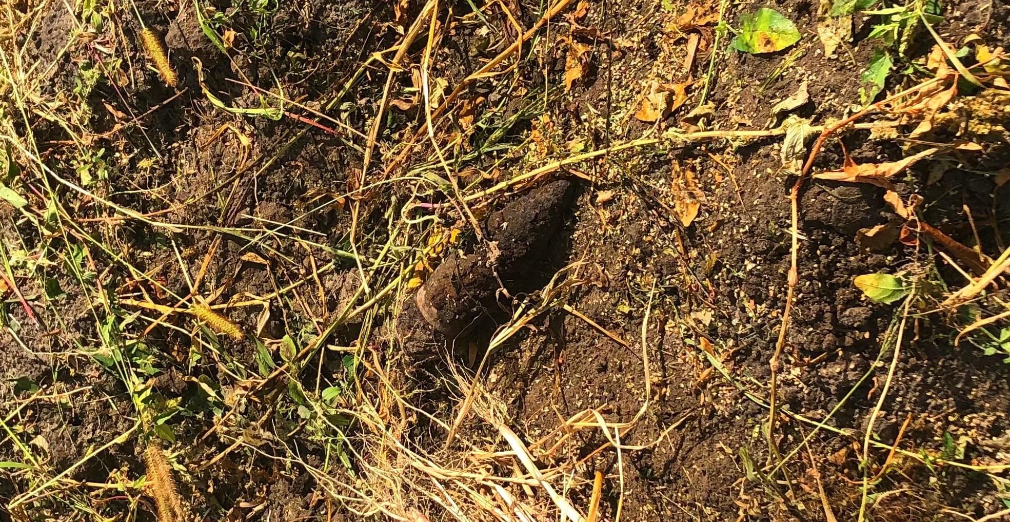 На Київщині під час проведення земельних робіт знайшли артилерійський снаряд -  - 01 3
