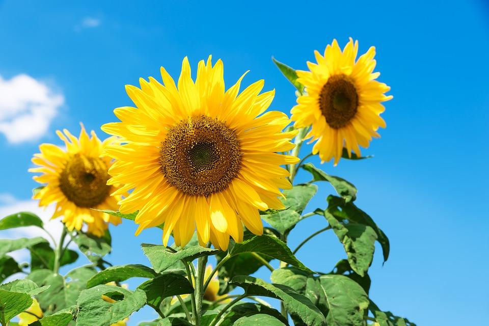 Перший день осені на Київщині буде ясним та спекотним -  - 01 pogoda2