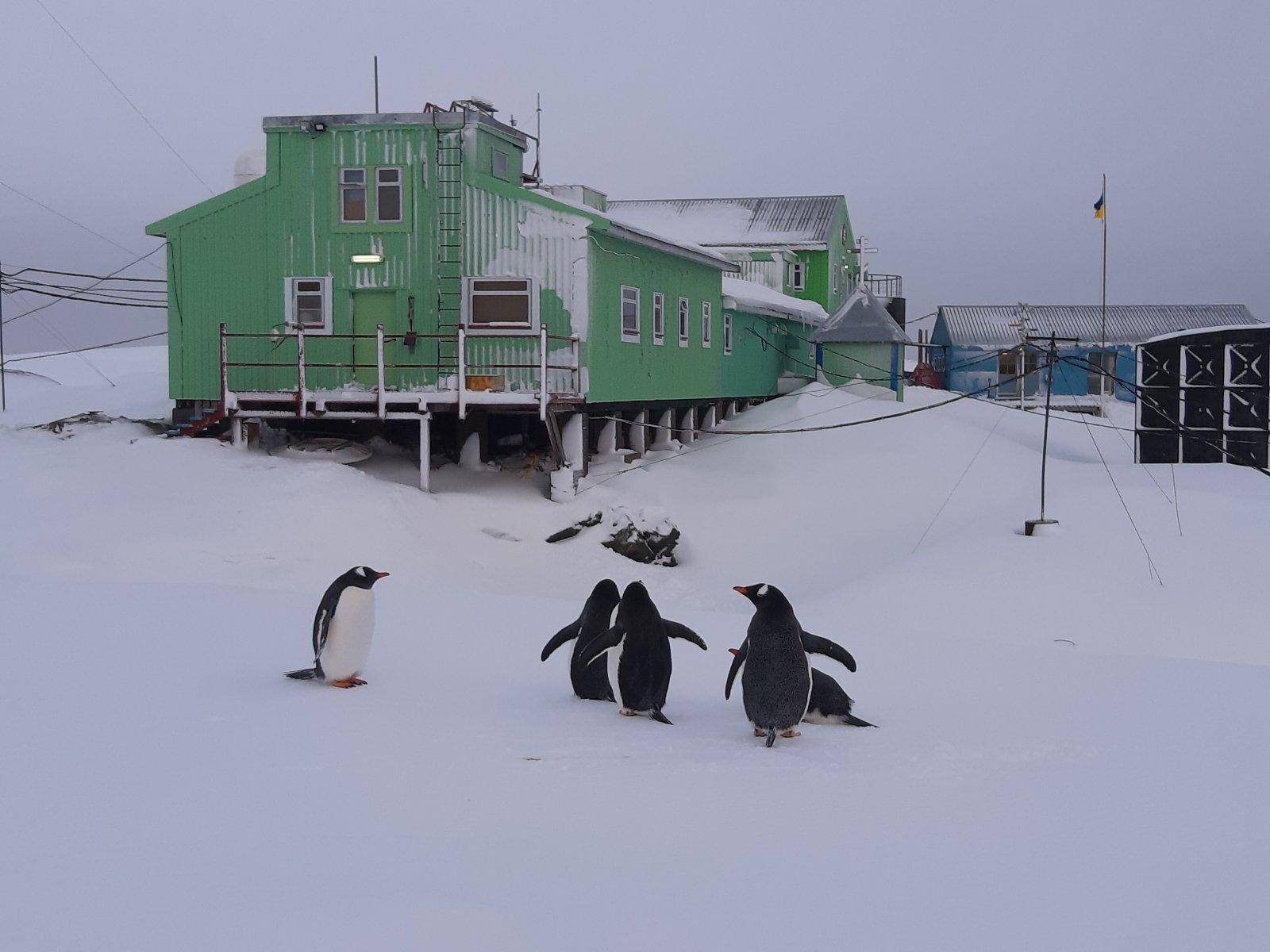 В розпал антарктичної зими на материк повернулися пінгвіни - Антарктида - 06 pyngvyny