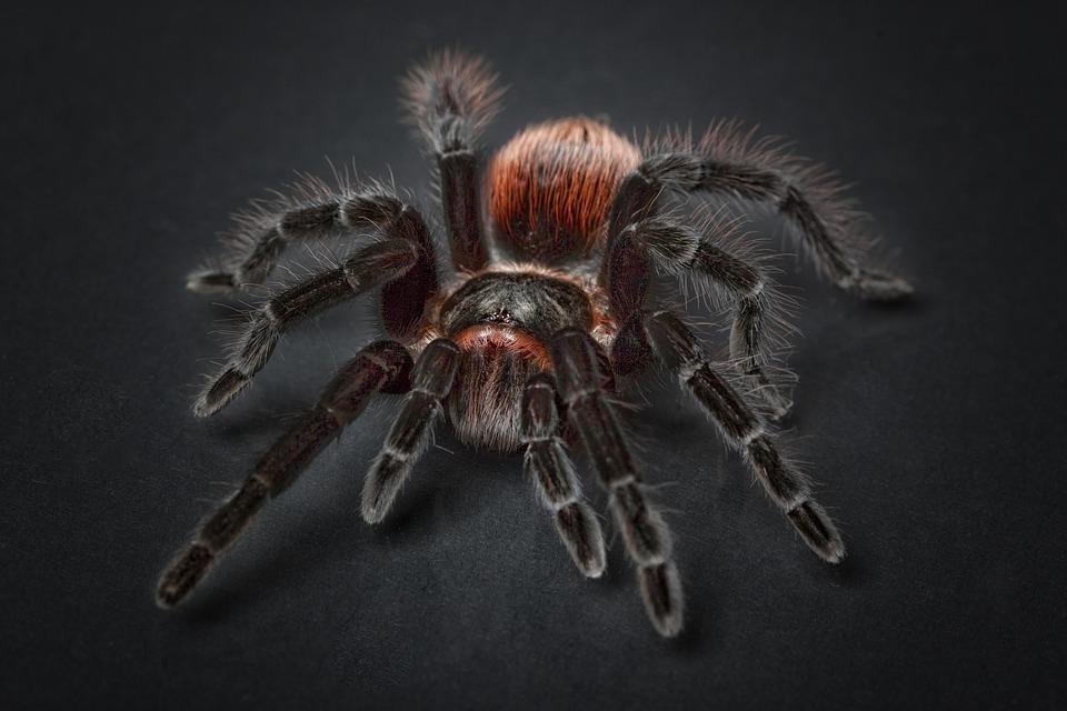 Як розпізнати отруйних павуків і змій за допомогою смартфона? - змія, додаток - 09 pauk