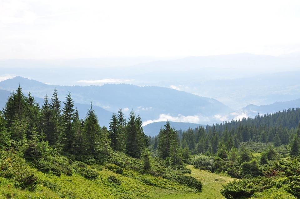 У Карпатах планують відмовитися від суцільних способів проведення лісозаготівлі - ліси, Карпати - 10 karpaty