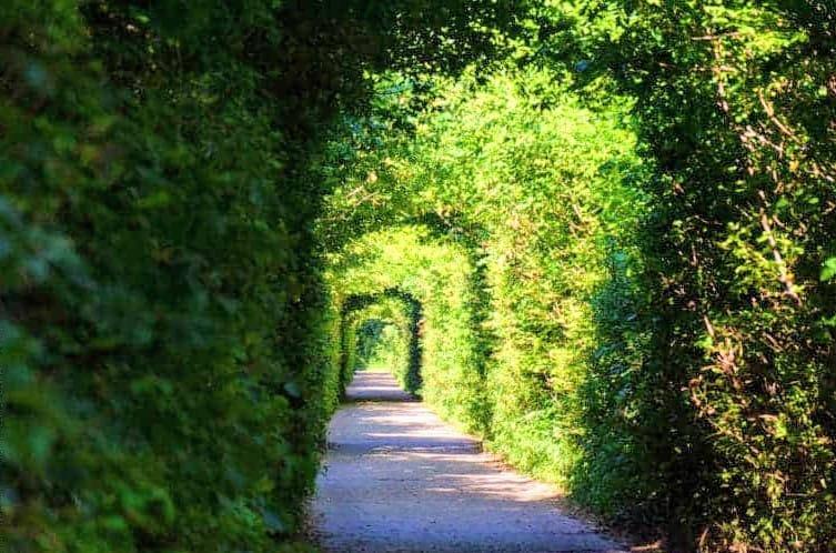 На Білоцерківщині є свій «Тунель кохання» - зелений тунель, Білоцерківщина - 116352148 3171031359645371 3184590992659770368 n