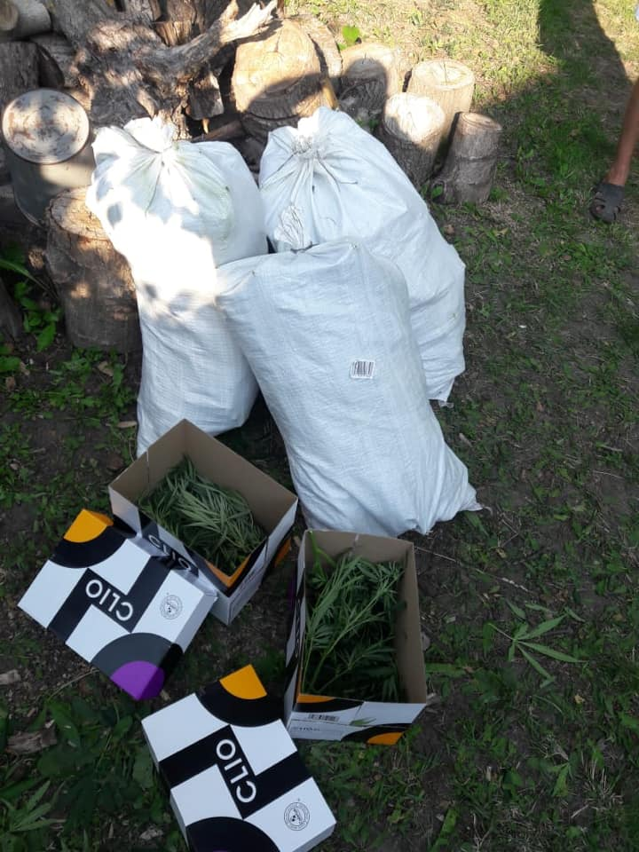 На Обухівщині правоохоронці вилучили у чоловіка кущі марихуани -  - 117382797 2242676209209910 941150375928029052 n