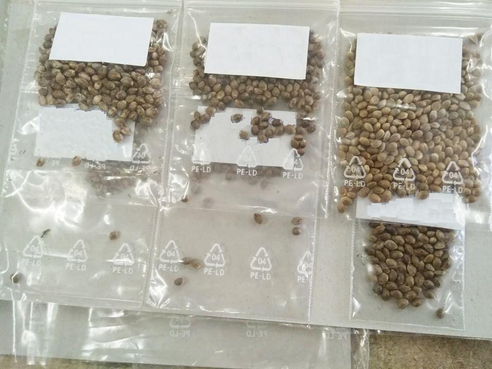 Українці замовляють насіння канабісу міжнародною поштою -  - 118208135 3385543698173068 5027983500688933359 o